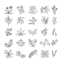 herbs and spices isolated outline icons vector image