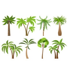isolated coconut palm trees vector image