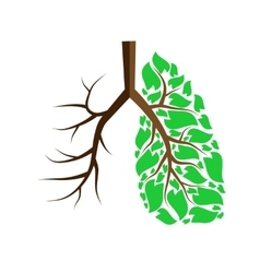 Lungs isolated on white vector