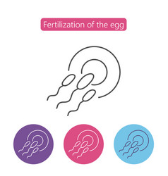 sperm fertilizing egg cell vector image