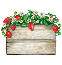 watercolor wooden sign covered with strawberry vector image