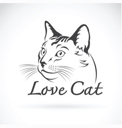 cute cat on white background pet animal vector image vector image