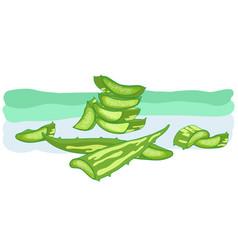 aloe vera medicinal eco plant vector image