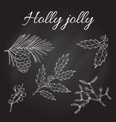 holly pine and mistletoe vector image