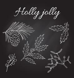 Holly pine and mistletoe vector