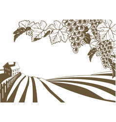 vineyard grapevine farm vector image