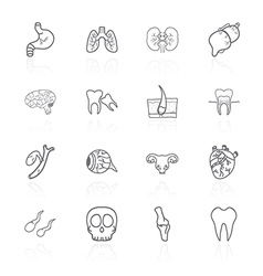 set of contour icons of internal human vector image vector image