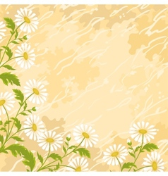 Background chamomile flowers vector