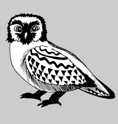 Hand drawn doodle of the owl vector