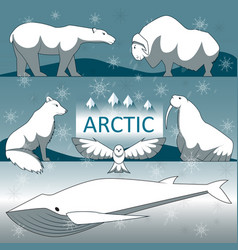 wild arctic animals vector image