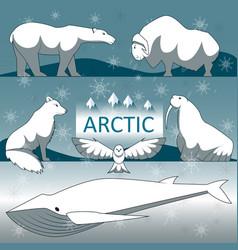 Wild arctic animals vector
