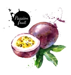 Hand drawn watercolor painting on white background vector image vector image