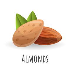 almonds icon cartoon style vector image