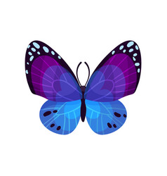 beautiful bright butterfly insect vector image
