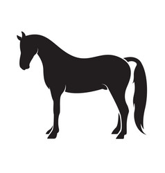 horse isolated on white background animal vector image