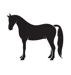 Horse isolated on white background animal vector