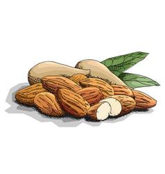 Simple nuts almonds vector
