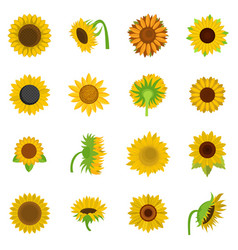 sunflower blossom icons set isolated vector image