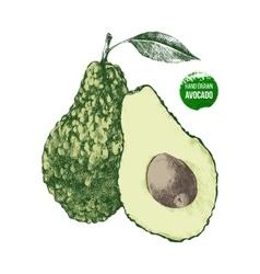 Hand drawn avocado vector