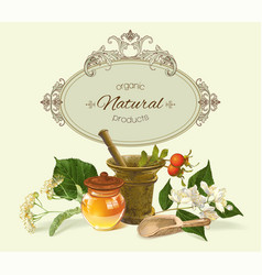 herbal banner vector image vector image