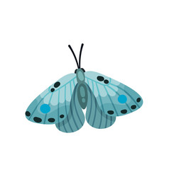 beautiful light blue butterfly insect vector image
