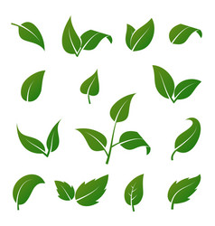 green tree and plant leaves icons isolated vector image
