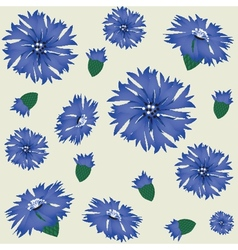 Seamless pattern with blue cornflower vector