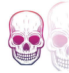 skull on white vector image vector image