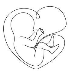 baby in womb vector image vector image