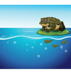 Frog and tadpoles vector image