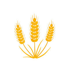 grain wheat icon on white vector image