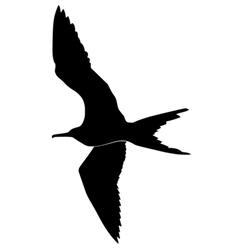 Silhouette of fregat bird vector