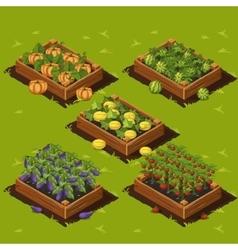 Vegetable Garden Box vector image
