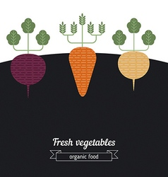 Beets Carrots Turnips vegetables vector