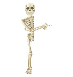 Cartoon halloween skeleton pointing vector