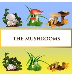 Icons of wild mushrooms and their growth vector image
