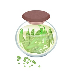 Pickled sweet green pea in a jar vector
