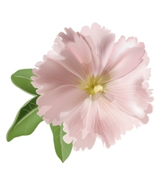 Pink mallow flower vector image