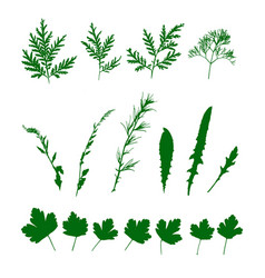 Set green grasses wild plants isolated pattern vector