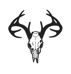 Skull of deer vector