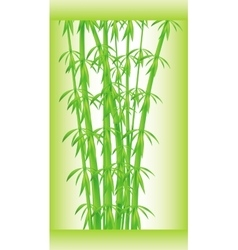 Stalks and bamboo leaves vector