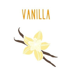 Vanilla beans vector image