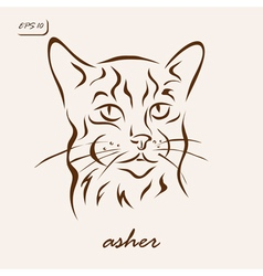 Asher vector image