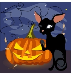 Black cat with a grinning pumpkin vector image