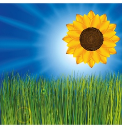 grass with sunflower vector image
