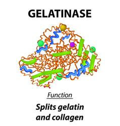 Molecular structural chemical formula gelatinase vector