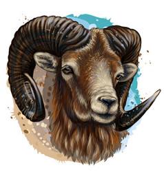 mountain sheep artistic color hand-drawn portra vector image