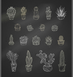 Set of chalk cacti and succulents on blackboard vector