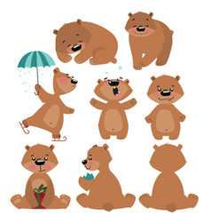 Set of grizzly bears collection of cartoon brown vector