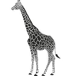 giraffe black and white vector image vector image